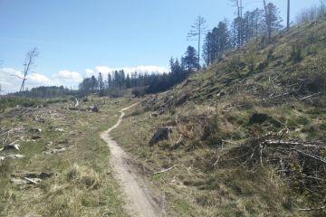 Vilsbøl plantage - MTB Spor
